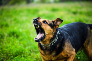 When Should You Sue Over Dog Bite Injuries?